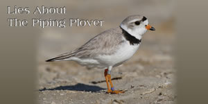 Lost jobs due to Piping Plover